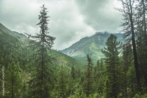 obraz lub plakat scenic view of mountain forests covering by fog