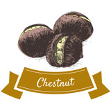 Vector colorful illustration of chestnut