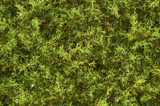 Texture of green fluffy moss. The background