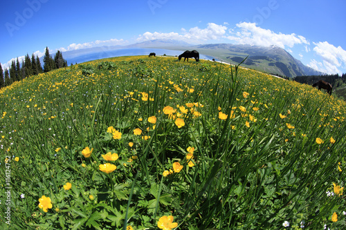 horse eating grass on beautiful mountain grass land