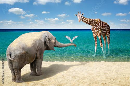 Fototapeta Elephant, seagull and giraffe at the beach