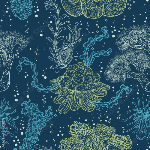 Collection of marine plants, leaves and seaweed. Vintage seamless pattern with hand drawn marine flora. Vector illustration in line art style.Design for summer beach, decorations. - 116221576