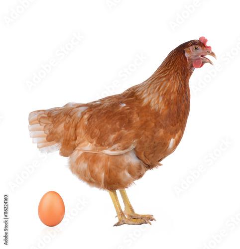 Staande foto Kip Hen eggs isolated on white background.
