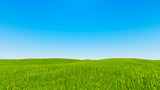 Landscape green grass blue sky 3d rendering