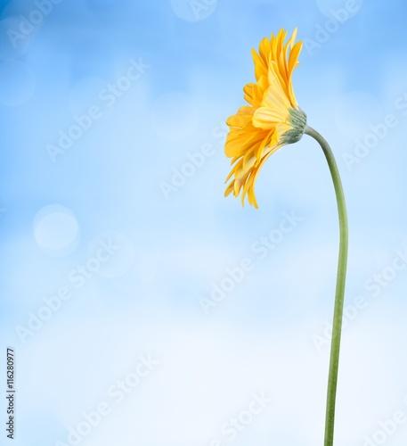 Zdjęcia na płótnie, fototapety, obrazy : Flower.