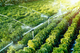 Irrigation system in function - 116303736
