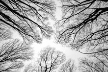 Direction générale des arbres morts