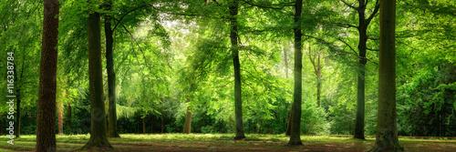 Panorama von Wald im verträumten sanften Licht und leichten Dunst