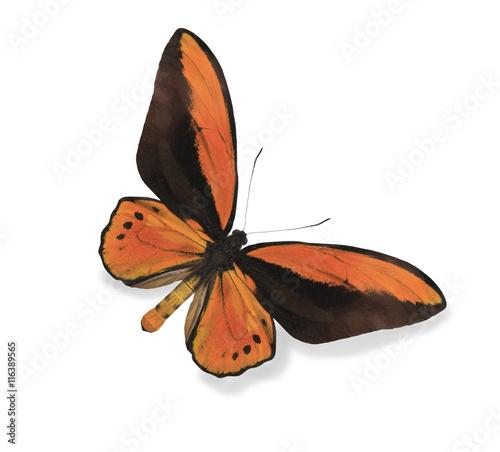 Deurstickers Vlinder Orange butterfly isolated on white