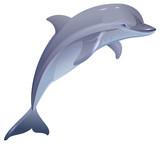 Marine mammal dolphin - 116408369