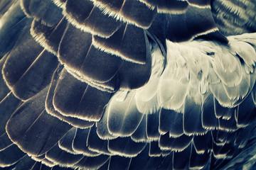 bird's plumage background
