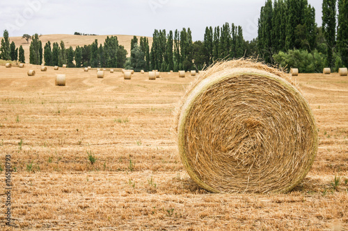 Large round hay bales in paddock. Poster