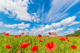 Beautiful panorama with poppy flowers near a wooden house, blue sky and white clouds