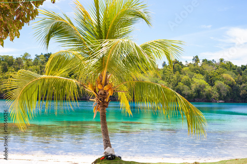 Photo Untouched Tropical Beach in Bali Island. Palm with fruits. Vertical Picture. Fishboat Blurred Background. Snorkeling Equipment.