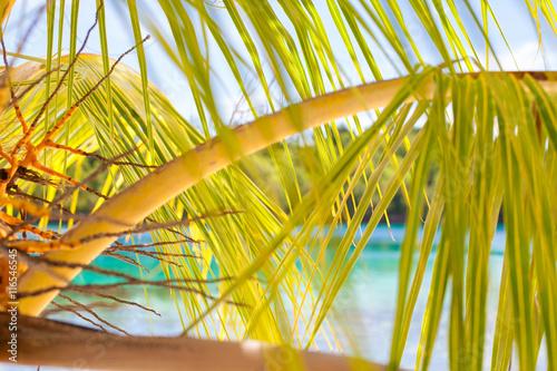 Photo Untouched Tropical Beach in Bali Island. Horizontal Picture. Closeup.