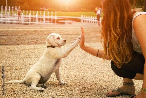 Poster Labrador Welpe und junge Frau geben sich ein High Five