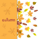 Fall background with watercolor autumn leaves. Vector illustration of maple, oak, chestnut leaves.
