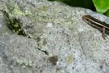 岩の上で休むトカゲ