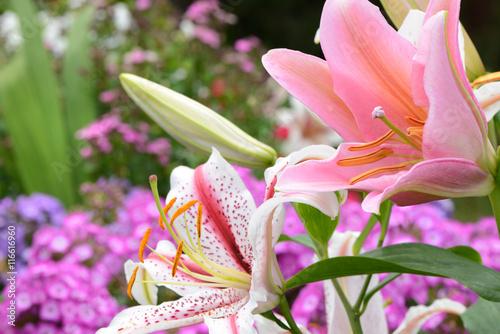 Fotobehang Purper Blumen 676