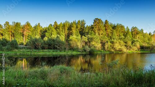 летний пейзаж соснового леса на берегу озера, Россия, Урал