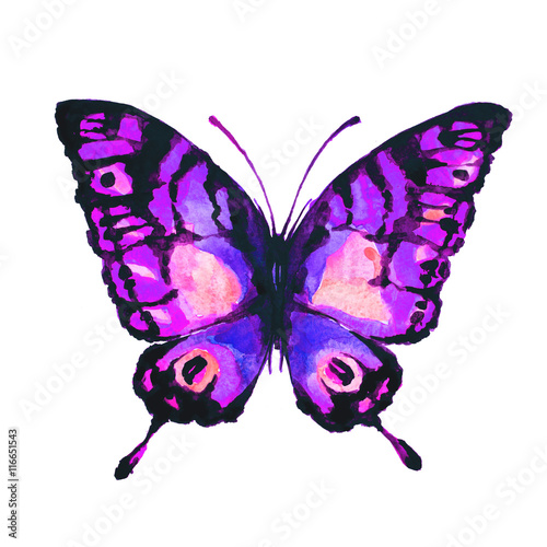 butterflies design © aboard