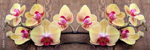 Obraz na Szkle Orchidea phalaenopsis