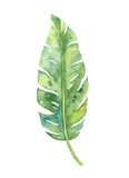 Fototapety Tropical banana leaf illustration