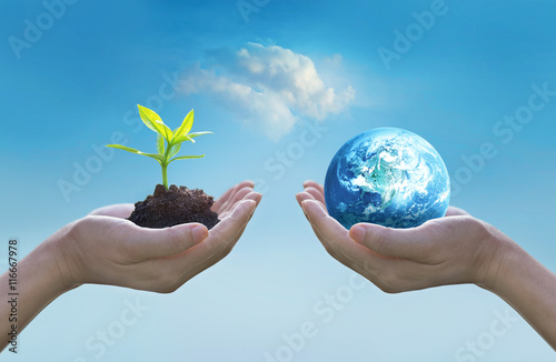 Hands holding earth and green tree , world environment day concept