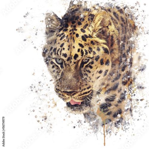 Portrait of Leopard watercolor - 116714979