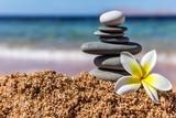 plumeria flower close up on sea beach