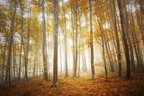 Colorful autumn season foggy forest tree landscape.