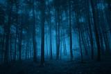 Dark blue colored spooky forest tree landscape. Blue color filter effect used.