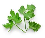 fresh green parsley leaves - 116757775