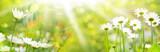 Fototapety Blumenwiese im Sommer  -  Panorama, Banner
