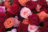Different colors of roses  - 116843901