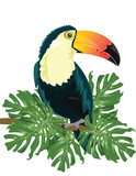 Vector Toucan sitting on tree branch isolated on white background. Tropical birds