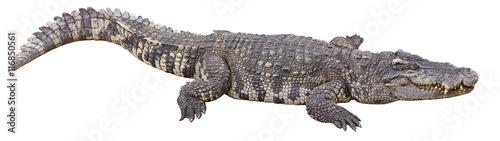 Foto op Plexiglas Krokodil crocodile big