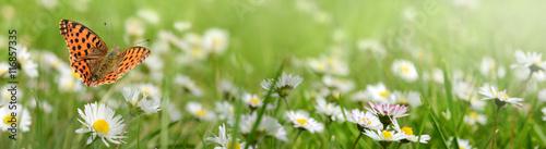 Kwiaty 692