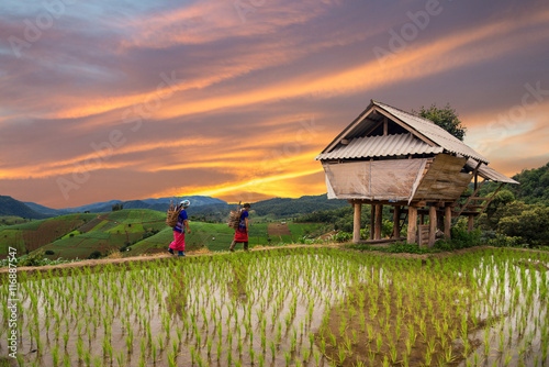 Deurstickers Rijstvelden Hmong woman with rice field terrace background in Chiangmai , Th