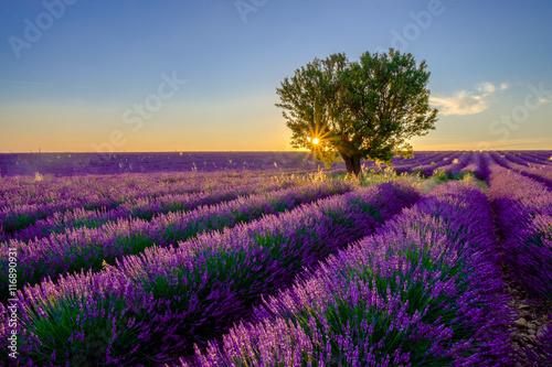 Zdjęcia na płótnie, fototapety na wymiar, obrazy na ścianę : Tree in lavender field at sunset in Provence, France