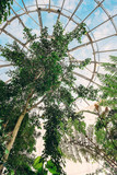 Tropical flora in giant glass biosphere