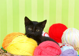 Close up of Fuzzy black kitten enjoying a comfortable spot in a crochet basket full of yarn balls. Green striped background. Copy Space