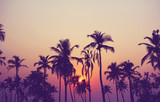 Fototapety Silhouette of palm trees at sunset, vintage filter