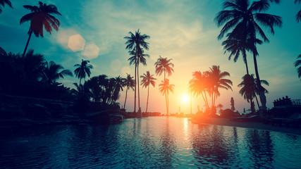 Palmy przy zachodzie słońca