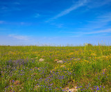 The blossoming Golan heights