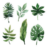 Watercolor tropical leaves - 117069594