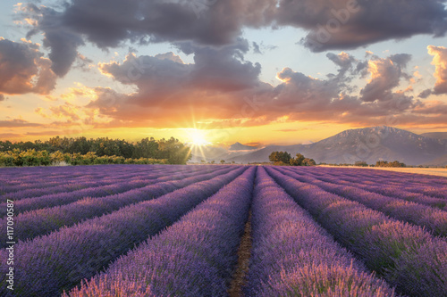Foto op Plexiglas Lavendel Lavender field against colorful sunset in Provence, France