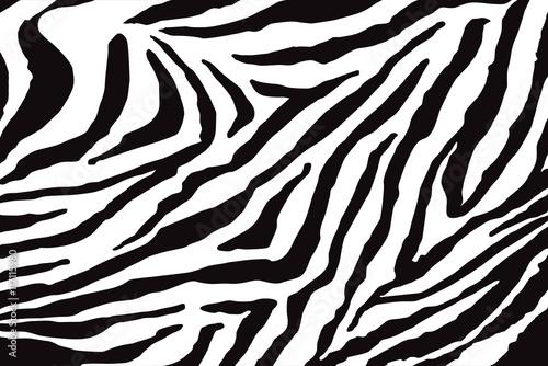 Fototapeta Zebra Pattern Vector