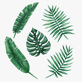 Watercolor tropical palm leaves. Vector illustration. - 117140302