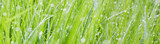 grass with dew drops - a beautiful bokeh background - 117144926